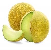Melone Galia